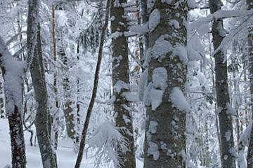 20051218-025.jpg