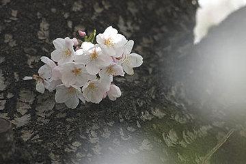 20060401026.jpg