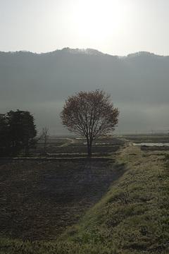 20080429008_2.jpg